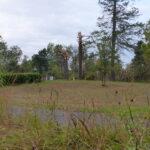 View across emerging prairie