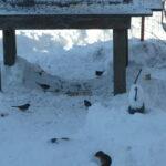 Chipmunk in the snow