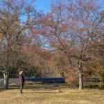 Woman looking at a tree.
