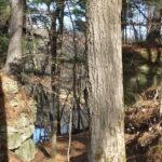 Tree by rock