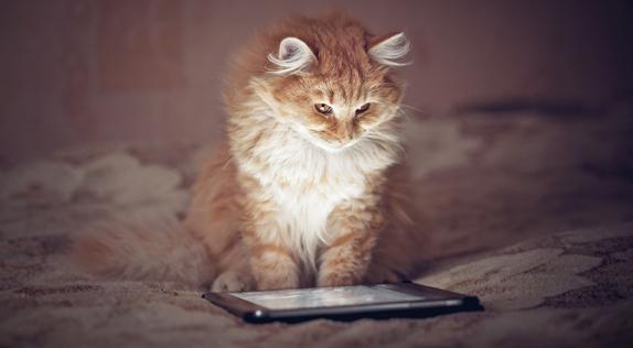 Cat Reading Blog