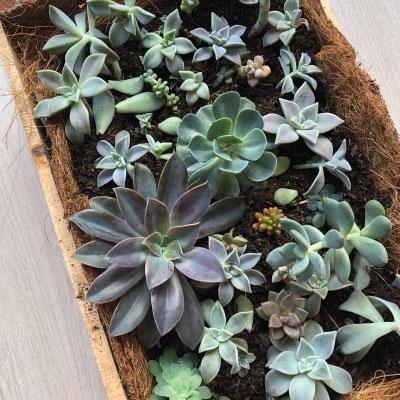 Cómo hacer un jardín de suculentas