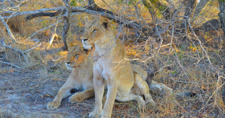 Safari in Sabi Sands | South Africa 2019