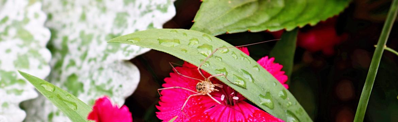 Are Spiders Common in Cincinnati?