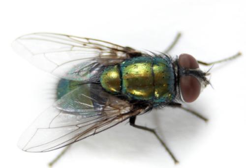 istock_000001759709small_2-flies