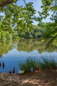 Lake in East Texas Pineywoods area of San Antonio Botanical Garden