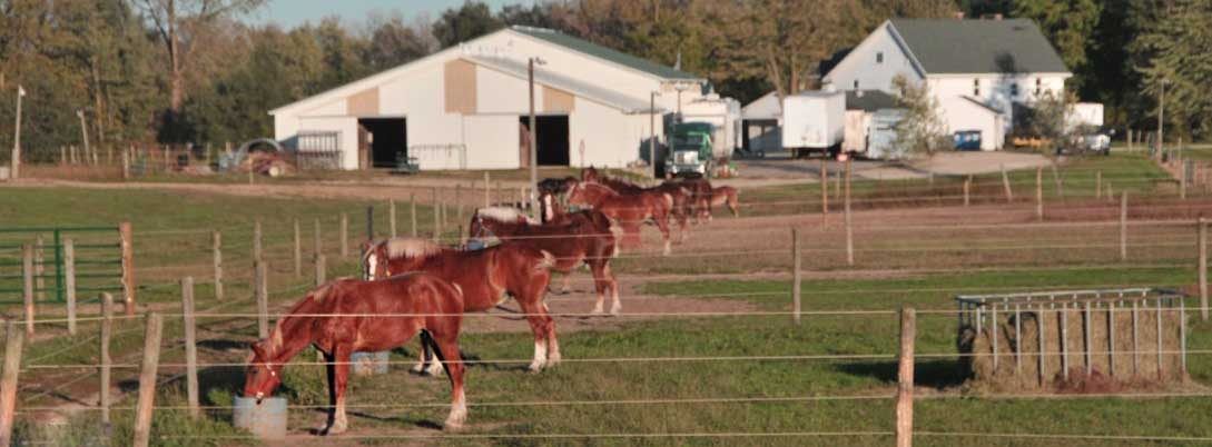 Horses Grazing at Oak Haven