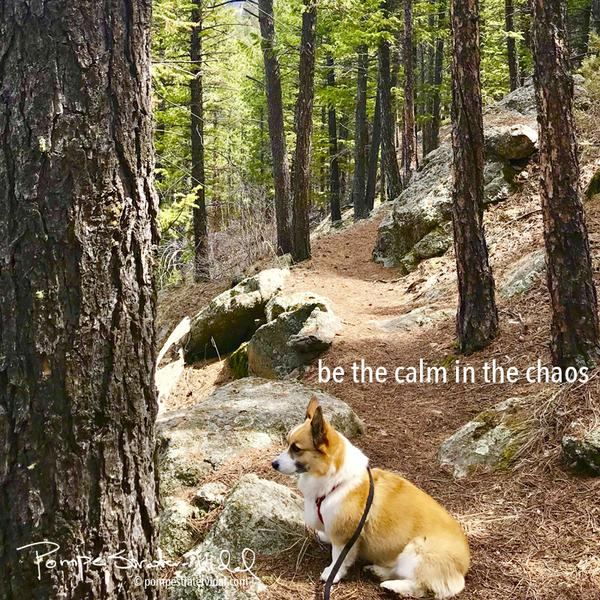 be the calm in the chaos