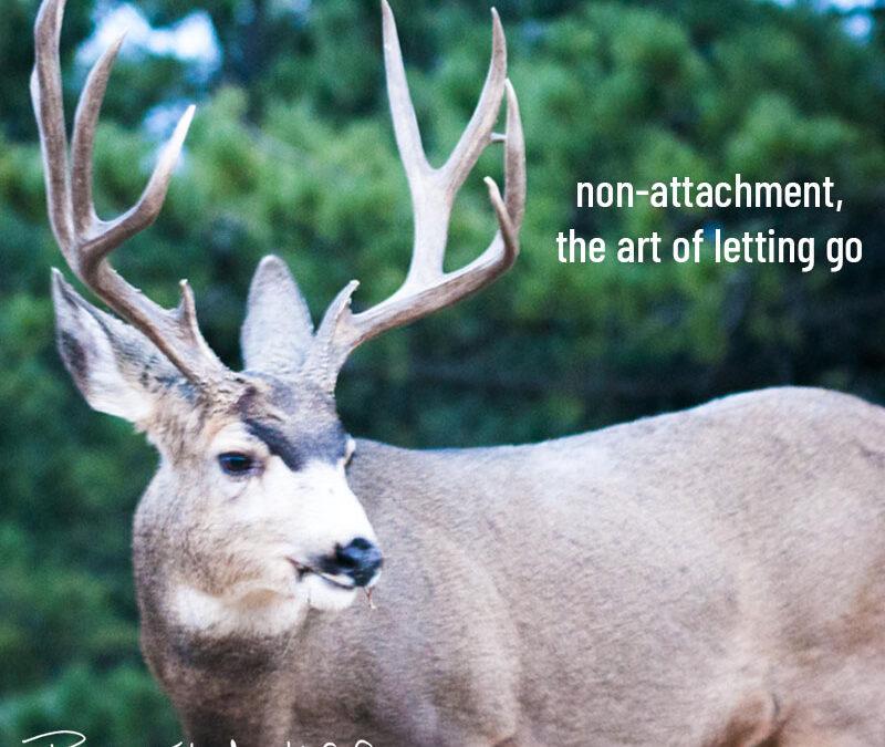 non-attachment, the art of letting go