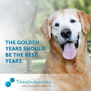#CSUStartup VetDC receives FIRST full FDA approval on Tanovea, their canine lymphoma drug