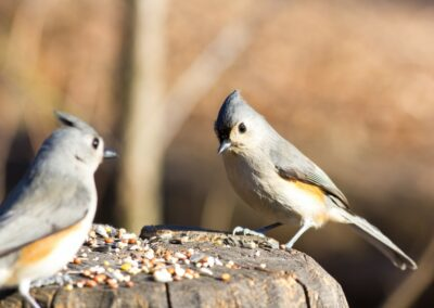 Ivermectin-Treated Bird Feed to Control West Nile Virus Transmission to Humans