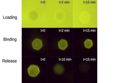 Engineered Programmable Molecular Scaffolds from Porous Protein Crystals