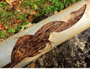 pipe clogged with roots