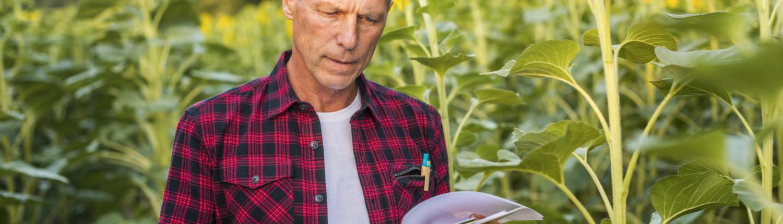 man reading in sunflower field | Counterweight Blue