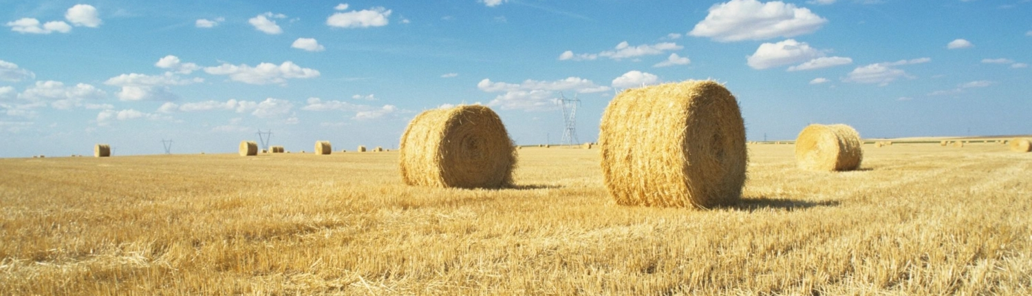 hay bales in a field | Counterweight Blue