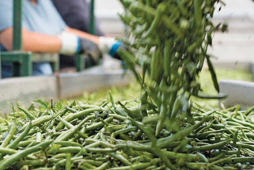 green beans at burnette foods in new era michigan
