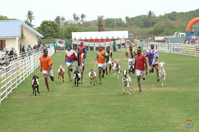 Buccoo-Goat-Race-Festival-2010-171