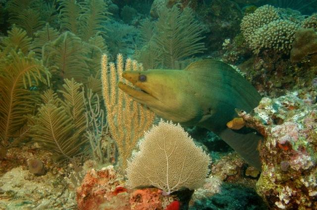 RTB_diving10.jpg.1024x0 (640x425)