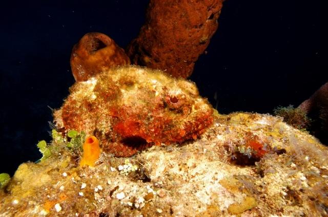 RTB_diving56.jpg.1024x0 (640x425)