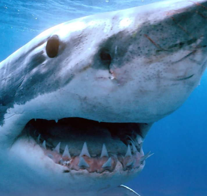 Shark Author Nicky Webber