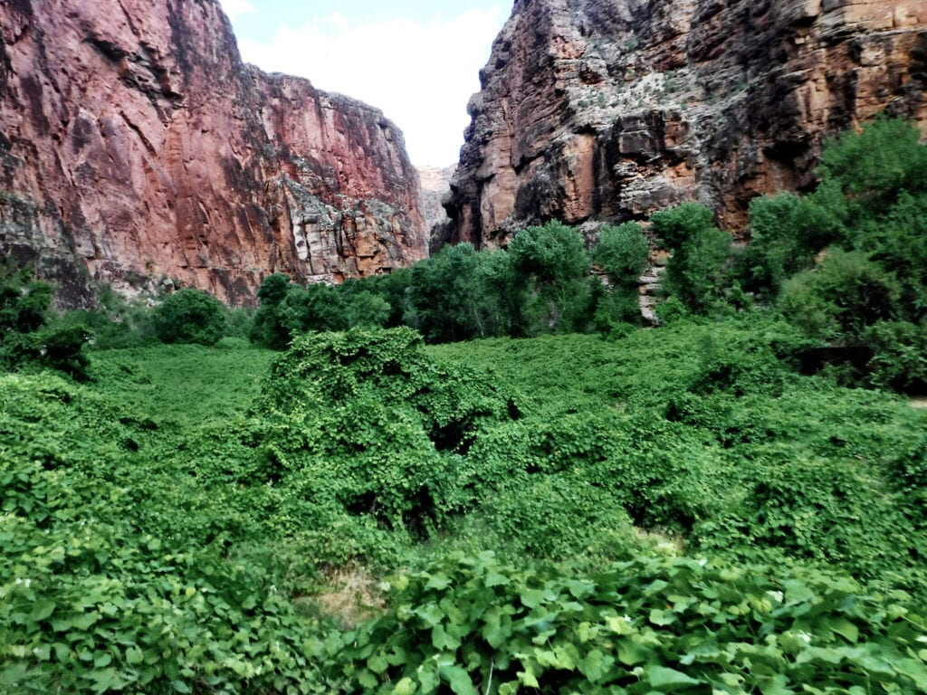 lush greenery against the red mountains The Grand Canyon, Arizona