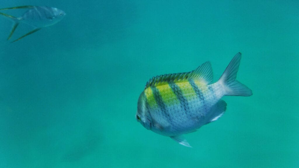 snorkling photo of striped blue and yellow fish in Cabo San Lucas, Mexico
