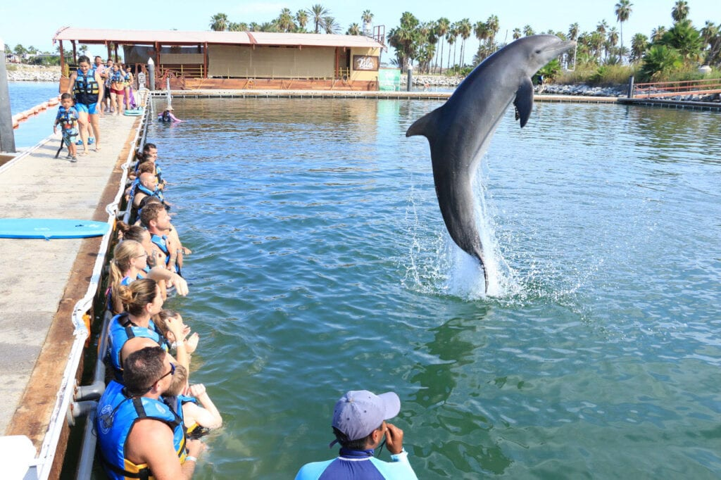 image of dolphin jumping out of the water Cabo San Lucas, Mexico