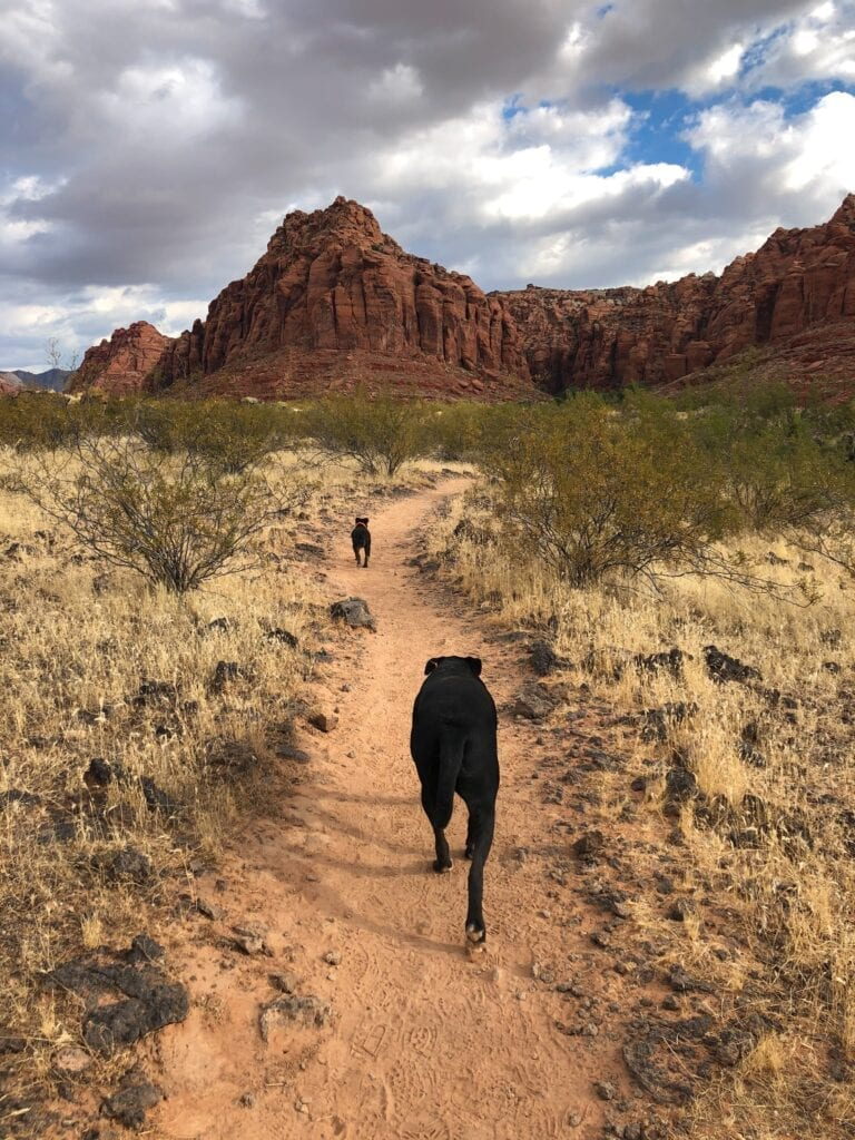 dogs on trail with mountains in the distance
