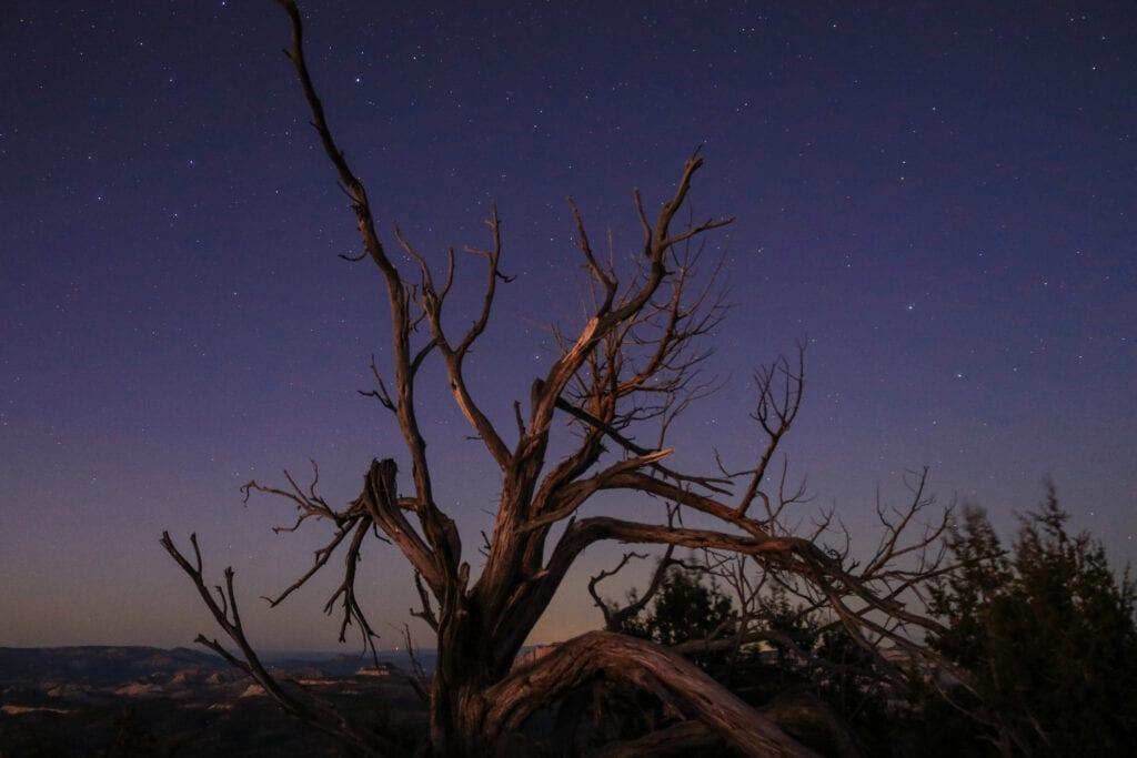 stars against a dead tree in the mountains