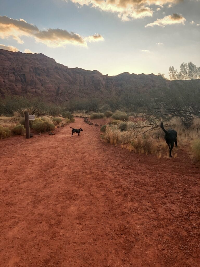 dogs hiking in the desert