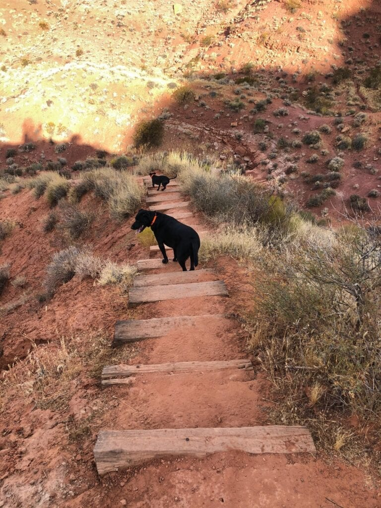 dogs climbing down wooden steps in the desert
