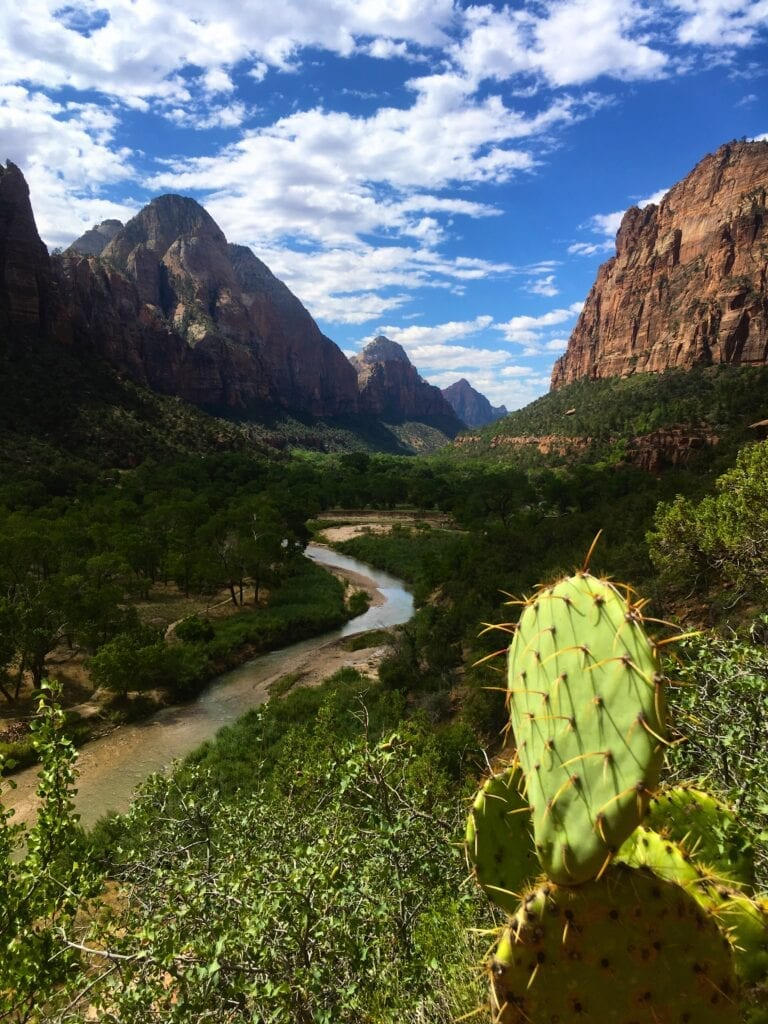 view of Zion national park with virgin river and cactus