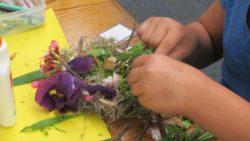 bird, nest, Nature Detectives, nature, art, science