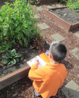 drawing, art, science, students, nature, Nature Detectives, observation, writing, writing, observe