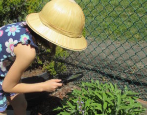 magnifying glass, plants, study, field experiments, Nature Detectives, nature, outdoors, garden
