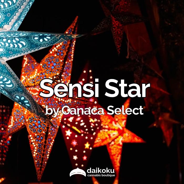 05/04/20: Sensi Star by Canaca Select   High THC Indica.