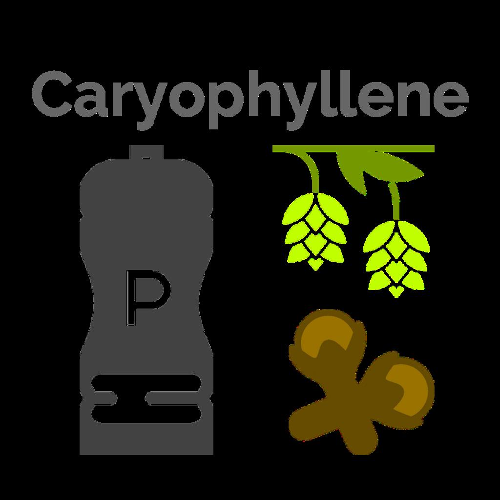 Caryophyllene is the main terpene found in Quadra