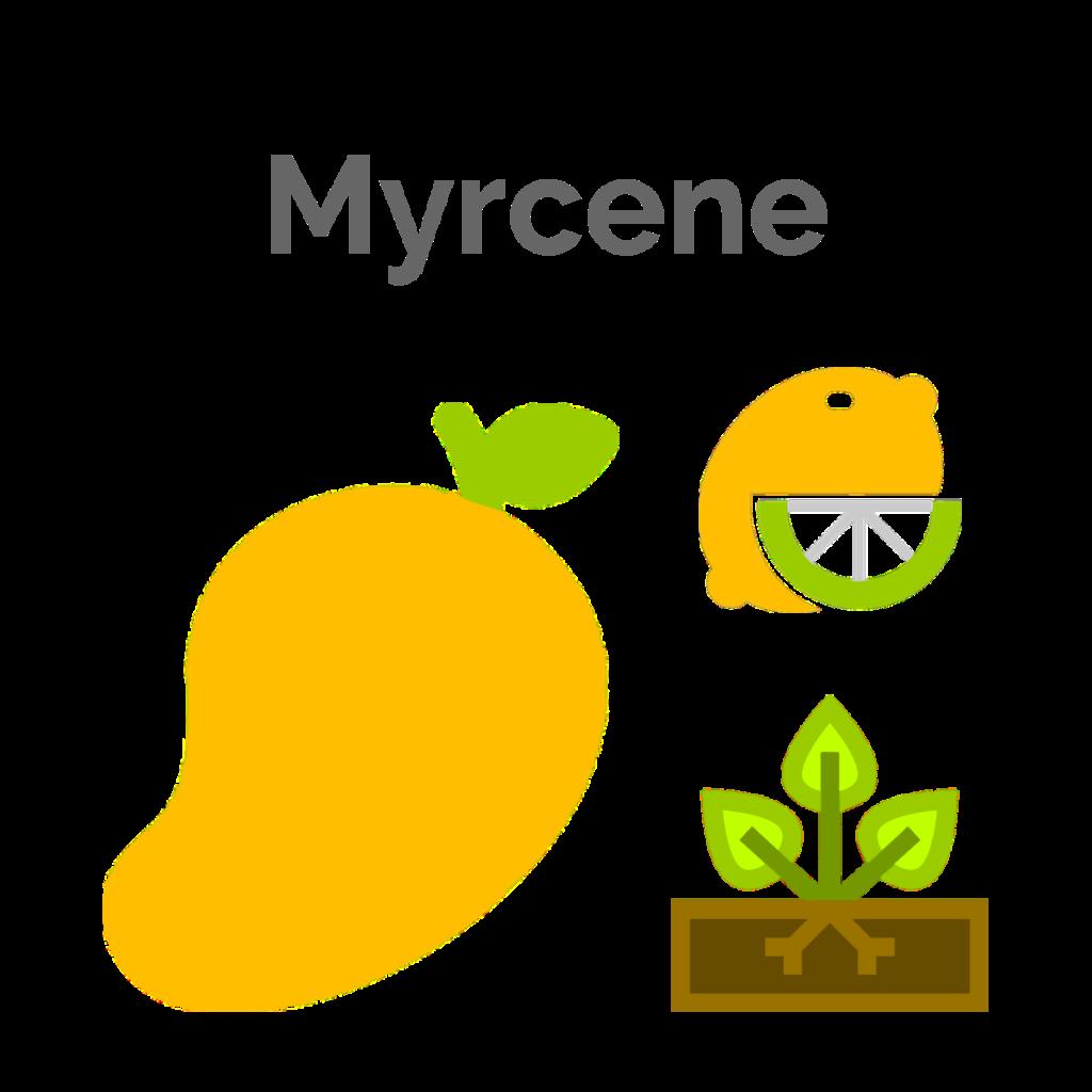 Myrcene is the primary terpene in Great White Shark