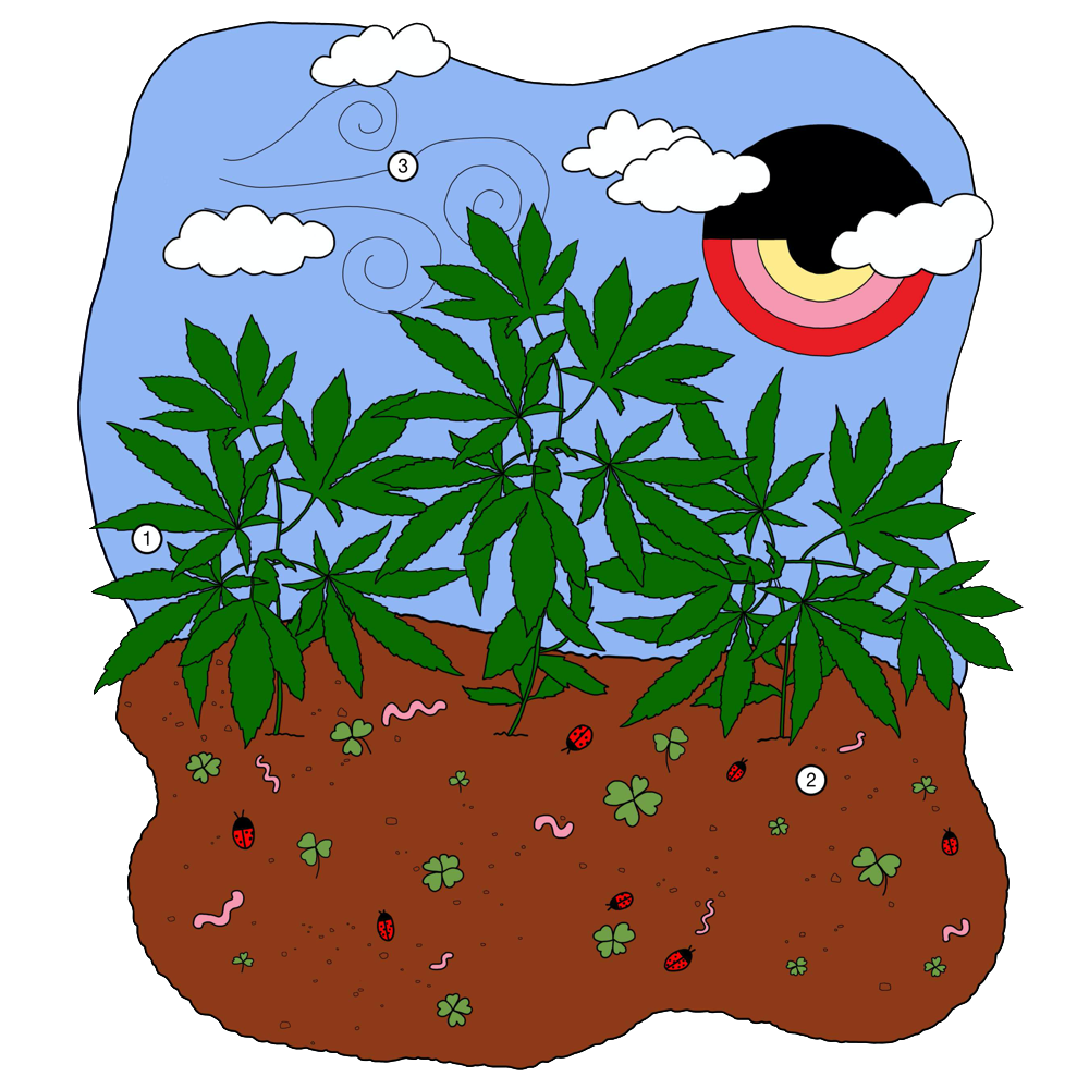 Living soil is an example of organic growing methods