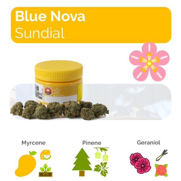 Blue Nova by Sundial: Myrcene, Pinene, Guaoil