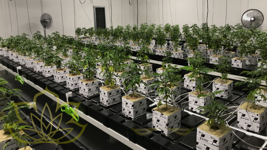 Smoker Farms grows cannabis products in the naturally unparalleled Kootenay Boundary country of British Columbia