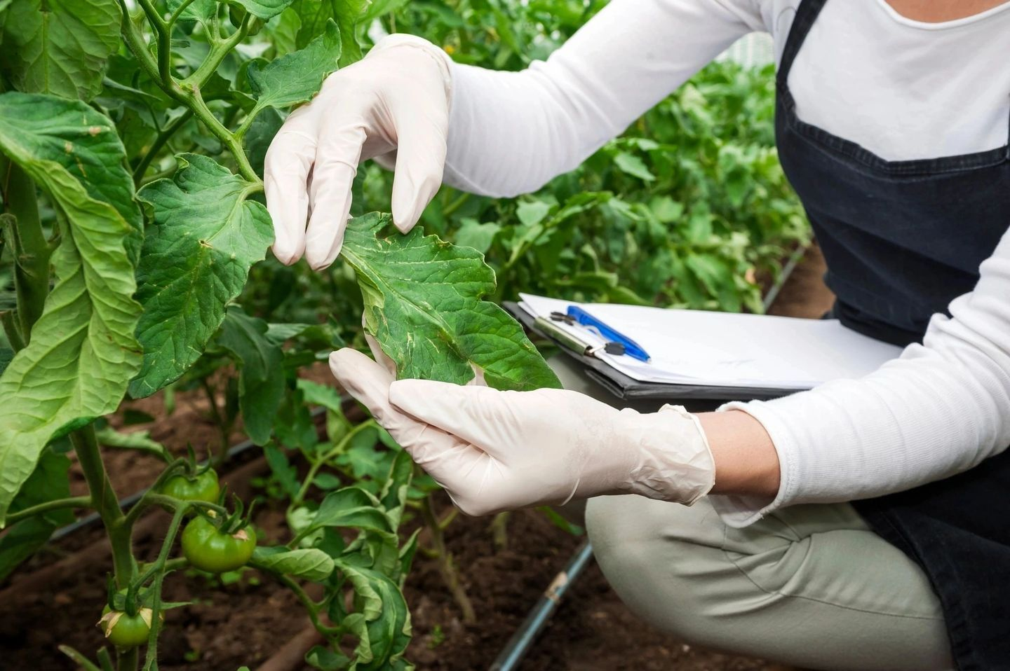 A woman wearing white gloves holding a plant