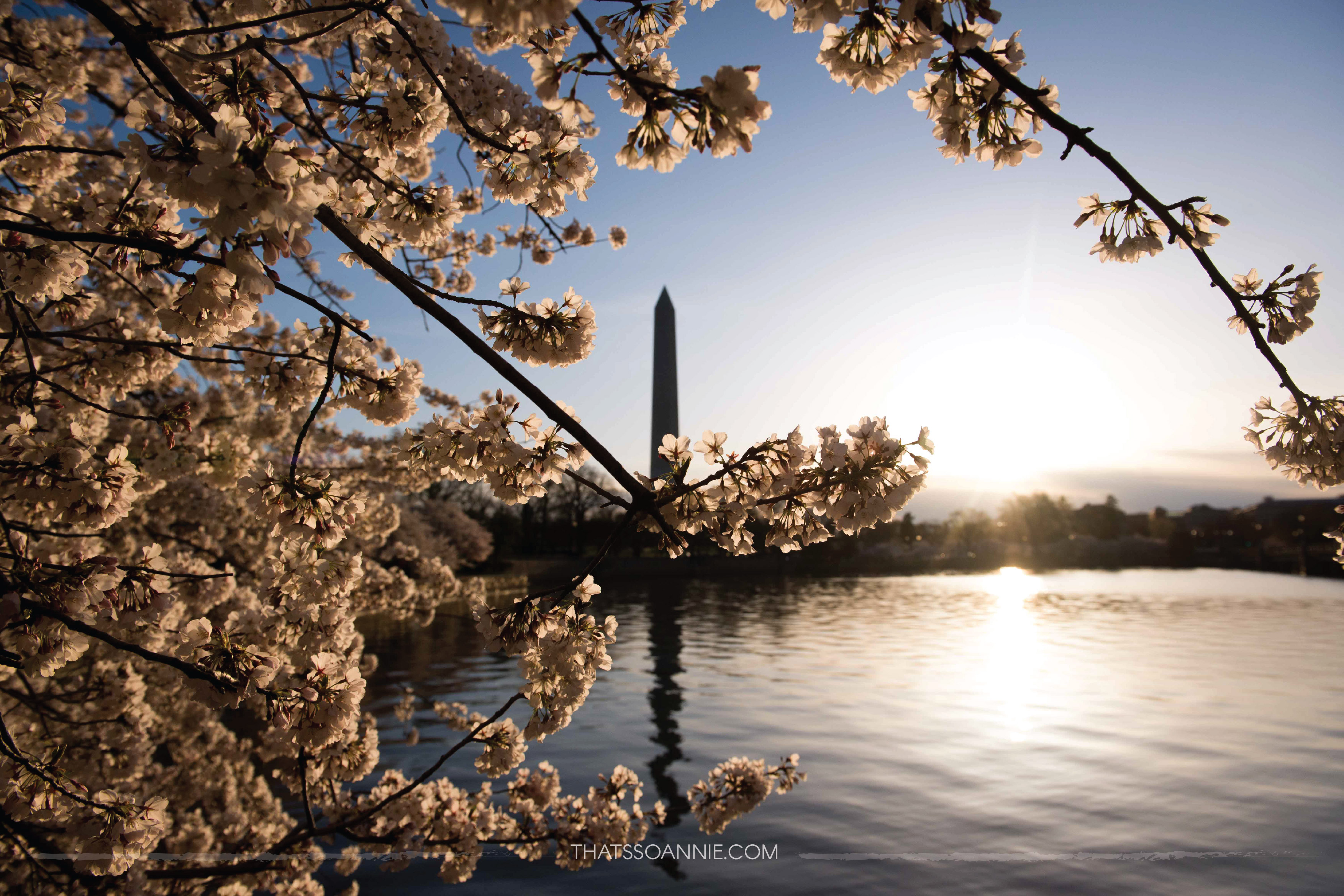 Washington Monument, as seen at dawn from Tidal Basin