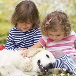 dog with children