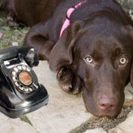 dog training phone consult