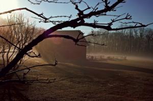 """Morning Ice,"" 2006, by Elizabeth Richebourg Rea."