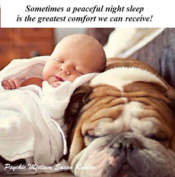 baby and dog sleep in comfort