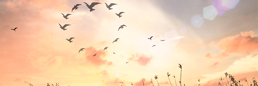 birds flying is a sign from Spirit