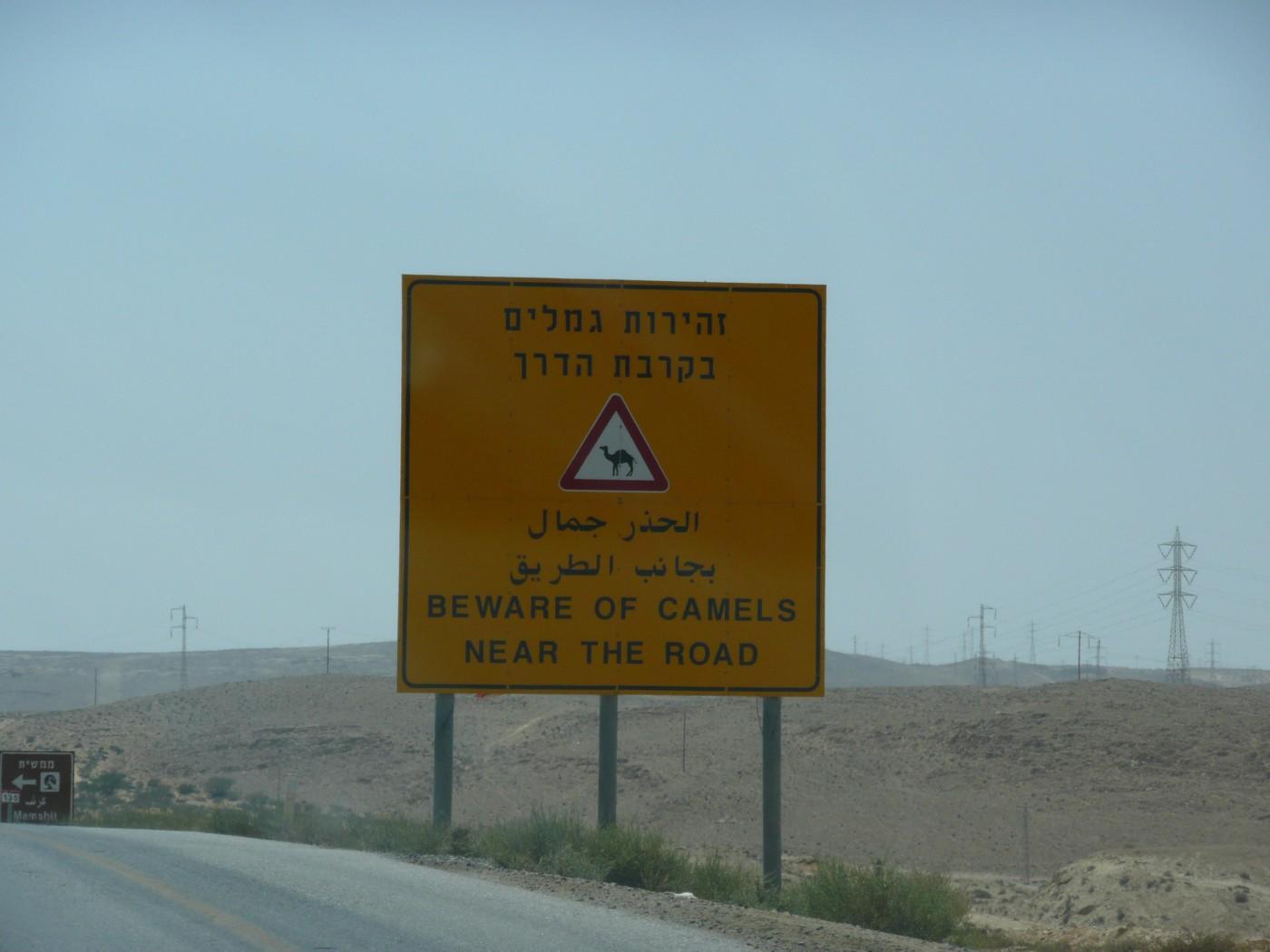 Beware of Camels