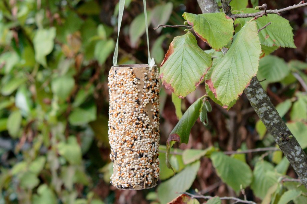 Toilet Paper Roll Birdfeeder - The perfect activity to do with your toddler!